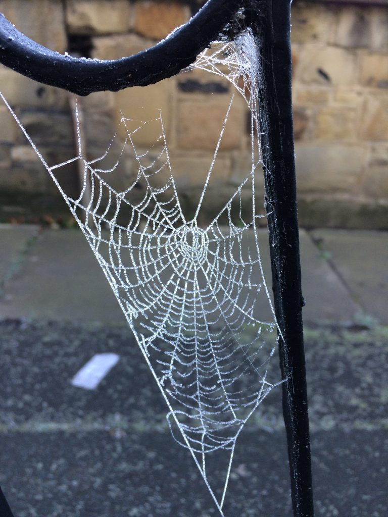 Photo: Frosty spider's web on my mum's front garden gate.